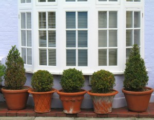 row of potted trees